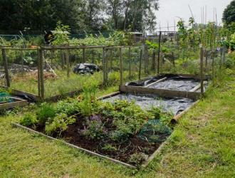 Allotments 3
